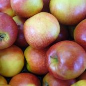 Australian_Organic_Apples