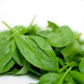Organic_Baby_Spinach