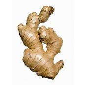 Fresh_Organic_Ginger