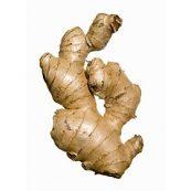 Fresh_Organic_Ginger
