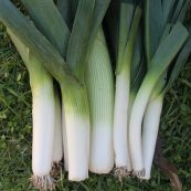 Local_Organic_Leeks