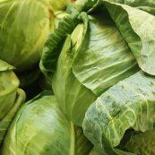 Organic_Green_Cabbage