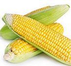 Organic_Corn_on_the_Cob