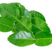 Organic_Kaffir_Lime_Leaf