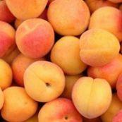 Organic_Apricots