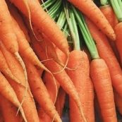 Organic_Dutch_Carrots