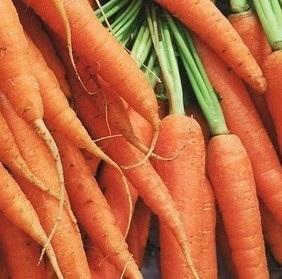 Organic_Dutch_Carrots
