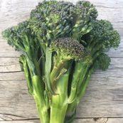 Baby_Broccoli