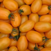 Organic_Yellow_Grape_Tomatoes